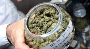 Marijuana Budtender Resume Help