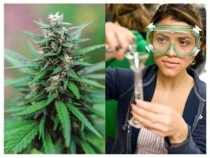 Marijuana Schools & Cannabis Training