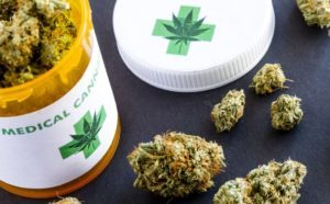 Medical Marijuana Resume Services