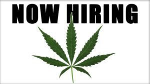 Cannabis Industry Jobs Resume